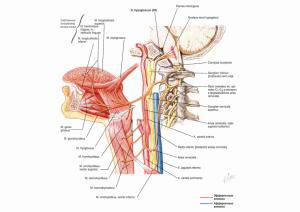 Подъязычный нерв