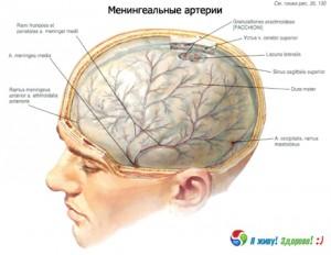 твердая оболочка мозга
