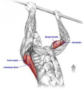 Основные режимы работы мышц